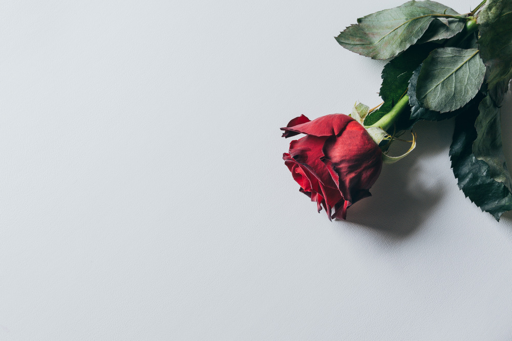 A Rose by Any Other Name: Making Sure Your Trade Name Smells as Sweet